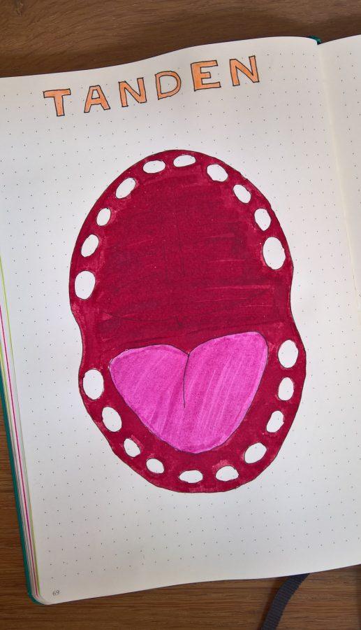 Bullet journal bijhouden tandjes baby mindjoy