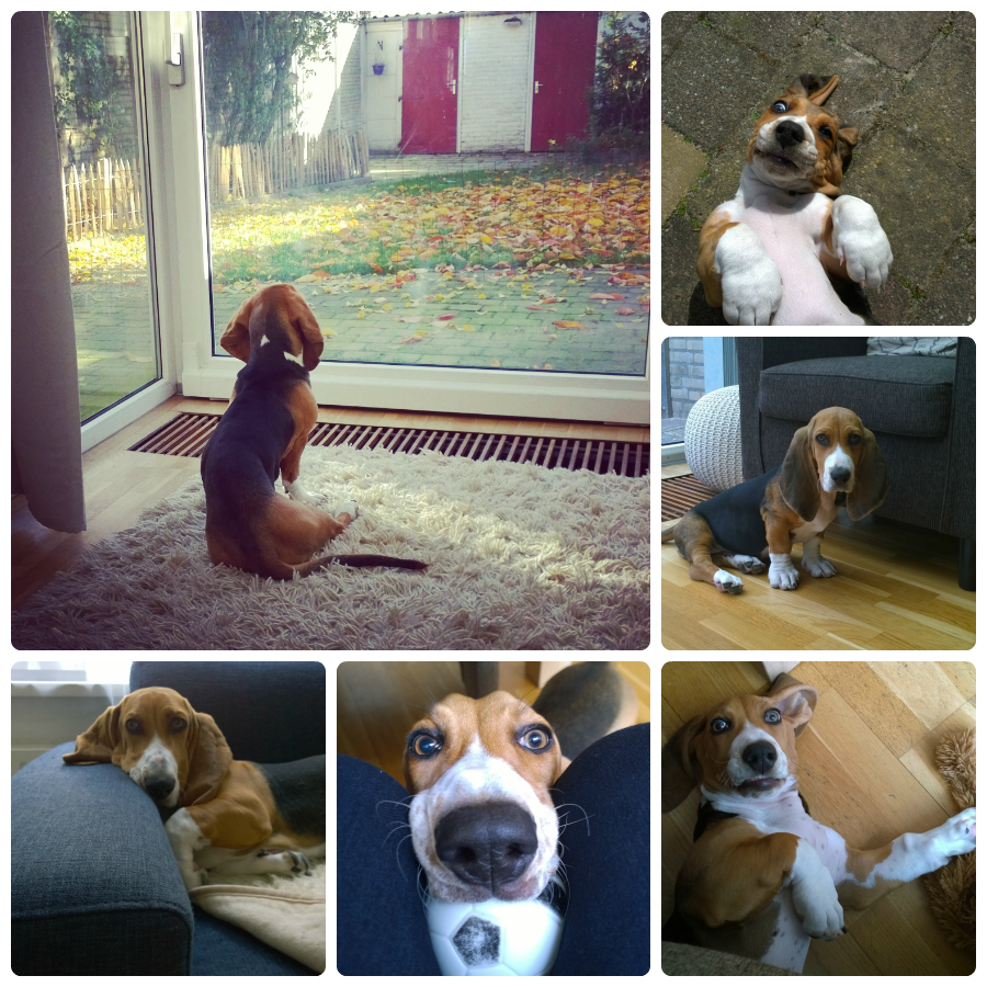 Collage Louie Franse basset