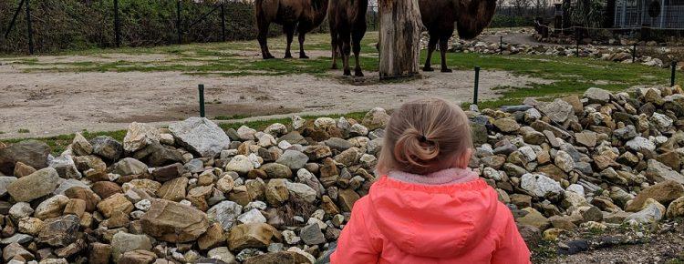 Dochter mindjoy dierentuin kerst 2018