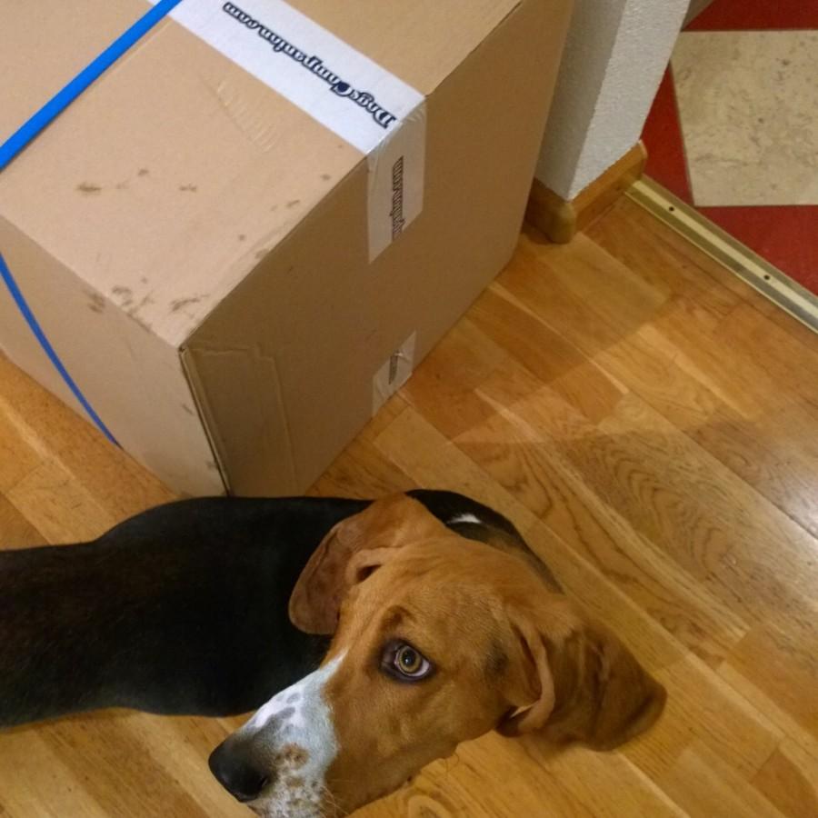 Dogscompany hondenbed Louie