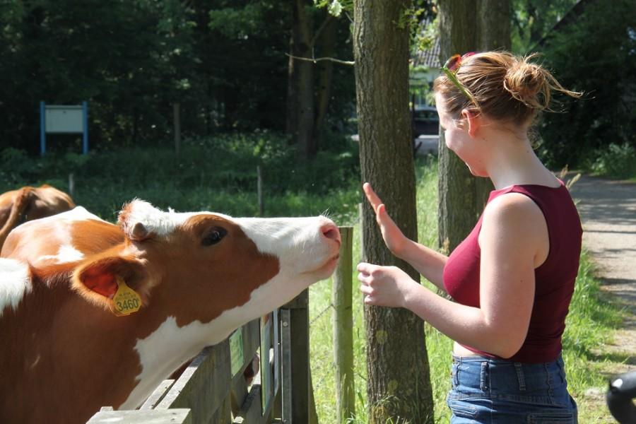 Hoe mindful is Desiree aandachtige blog