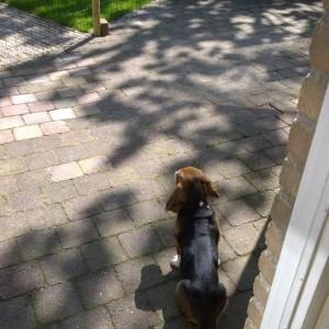 Louie buiten kijken mindjoy