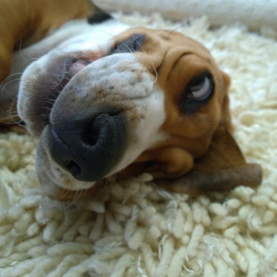 Louie laat je lachen mindjoy