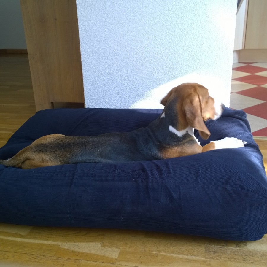 Louie liggen op hondenbed dogscompany