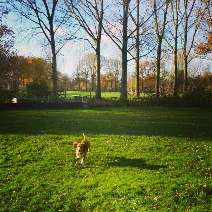 Louie mindjoy rennen speurcursus