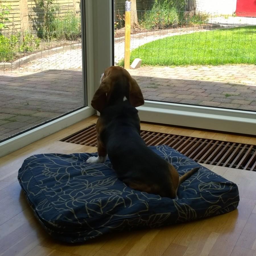 Louie mindjoy zittend op troon
