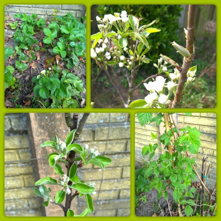Moestuin onze tuin mindjoy