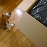 Dierendag | hondenbed voor Louie