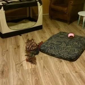 Plog augustus 2015 tijdelijk onderkomen Louie zolder
