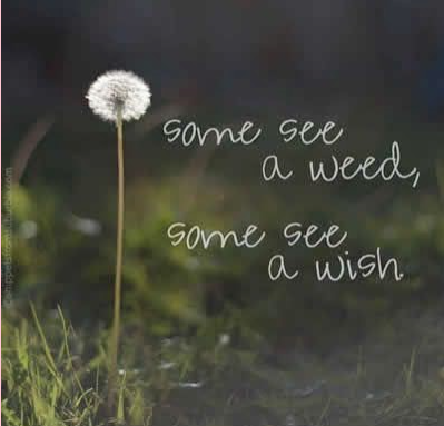 mindfulness quotes weed or wish