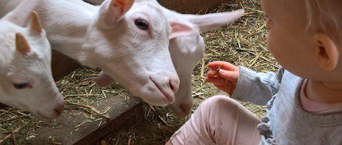 Geitenboerderij Utrecht kind mindjoy