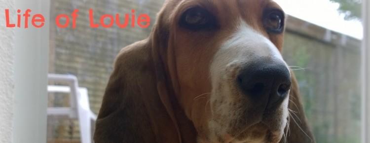 Life of Louie header mindjoy